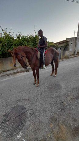 Vendo egua bem montada