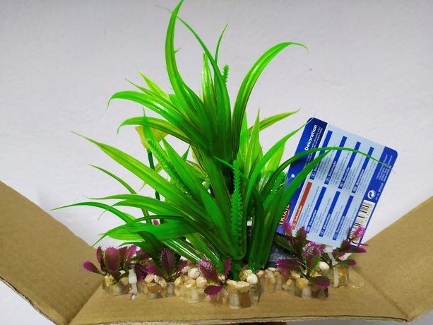 Roślina do akwarium nowa