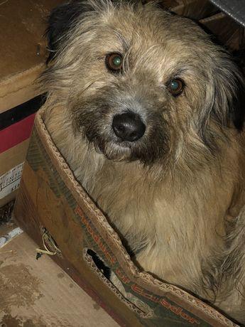Подарите собаченке ДОМ- спасите ей жизнь!
