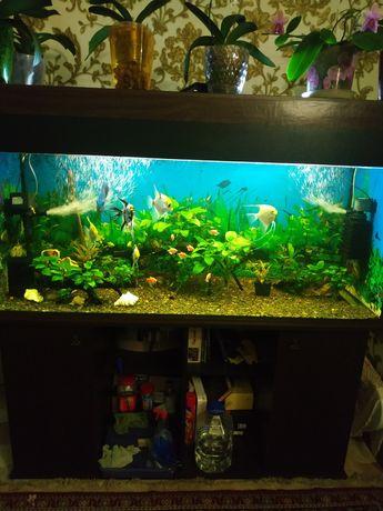 Продам рабочий аквариум 500 литров,со всем содержимым+ тумба,все в отл