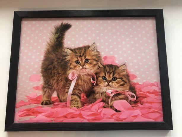 Obraz z kotami