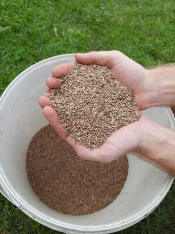 Saladera seradela nasiona, ekologiczna uprawa bez nawozów sztucznych