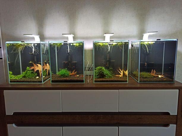 Akwaria z krewetkami ( czytaj opis)
