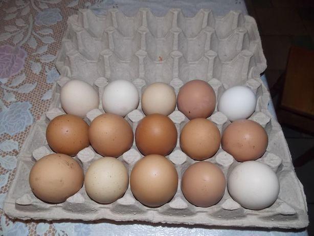 Инкубационное яйцо смешаных пород
