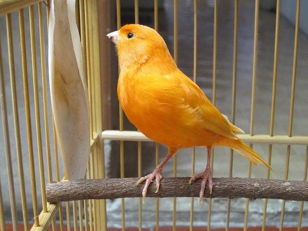 Передержка присмотр птиц и животных в Одессе