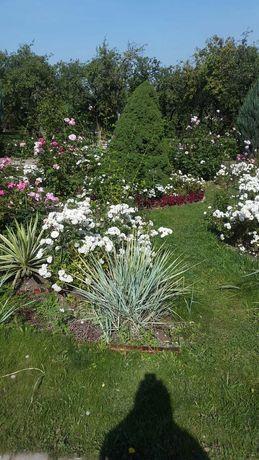 Отопление, тёплый пол,водопровод, канализация,автополив сада