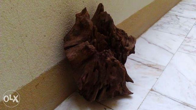 Tronco Madeira Red Mangrove