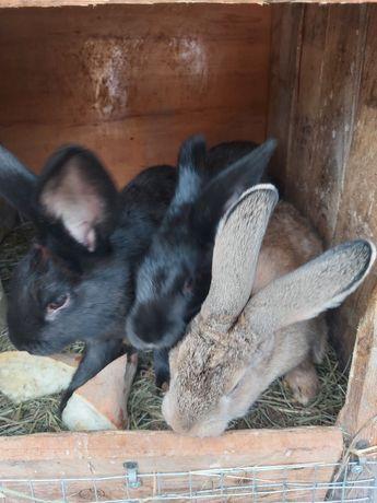 Кролики,кролі...
