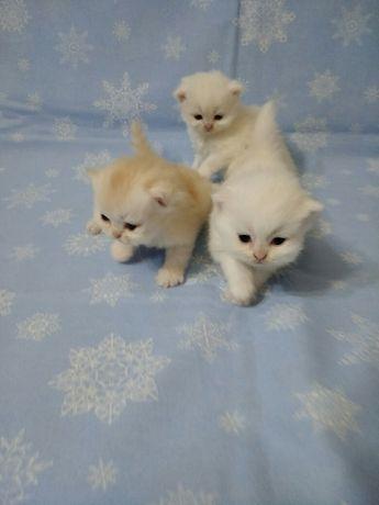 Милые  котята-комочки