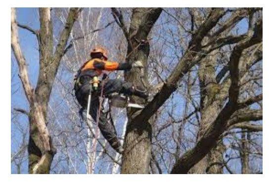 Валка деревьев любой сложности