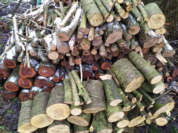 Drewno owocowe do wędzarni, wędzenia. Śliwa, wiśnia, czereśnia.