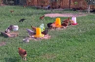 ŚWIEŻE jajka wiejskie *WOLNY WYBIEG* Tanio i zdrowo