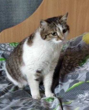 Скромная котеечка мечтает о доме, отдам ласковую кошку