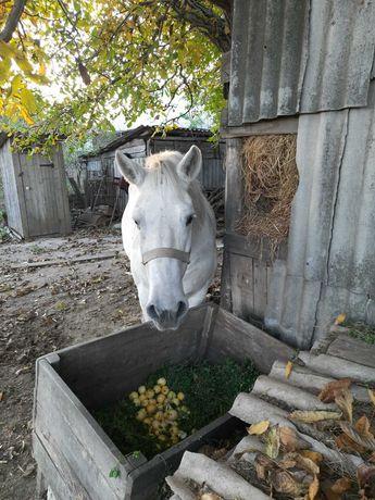 продам свою лошадь (кобыла)