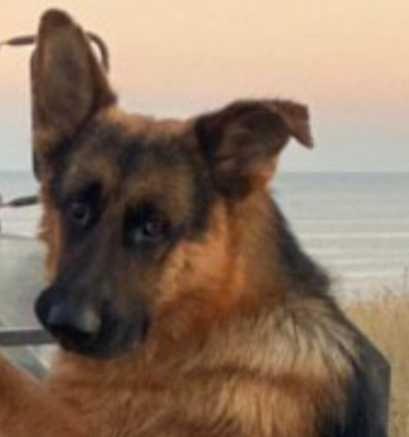 Пропала собака Бахмут