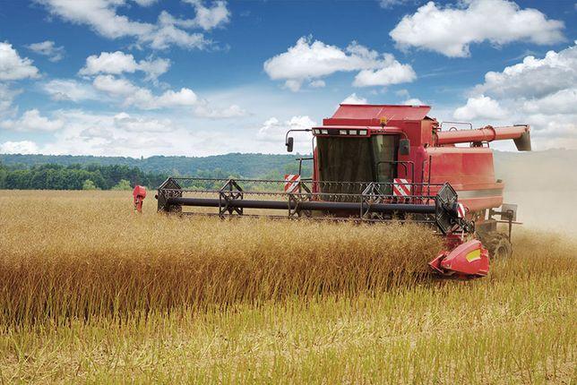 Zbiór kukurydzy, koszenie, młócenie , transport