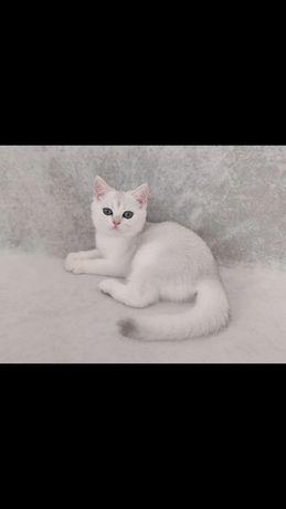 Кошечка ns 11.