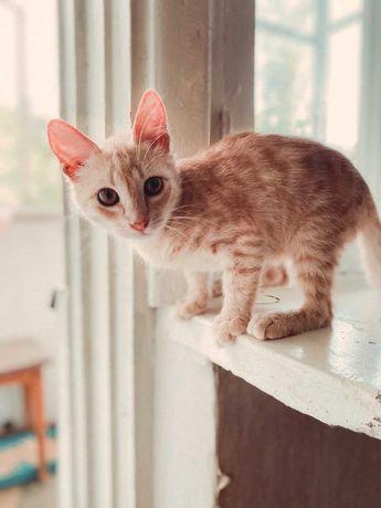 Рыжий котенок котята отдам в добрые руки