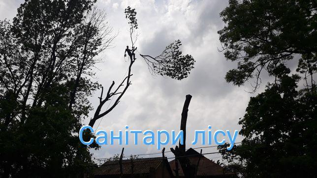 Зрізання зріз аварійних дерев видалення обрізка удаление деревьев