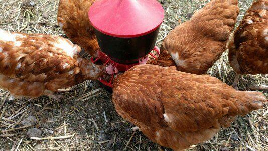 Jajka wiejskie 0.70gr