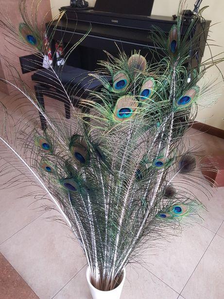 Naturalne pióra pawie