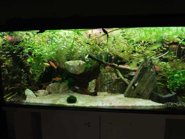 Rosliny akwariowe