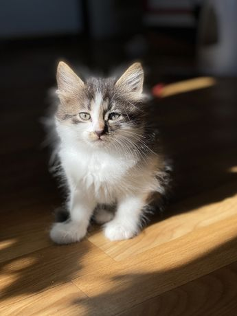 Отдам котят в добрые руки