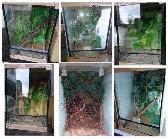 Jaszczurki nadrzewne: gekon orzęsiony lub jemeński, z terrarium