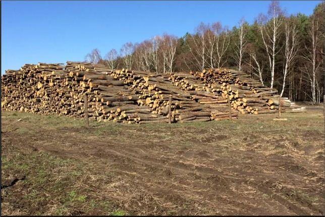 Drewno Kominkowe GRAB Zielona Góra I Okolice Drzewo