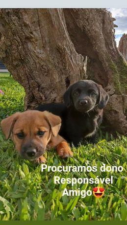 Cãezinhos para Adoção