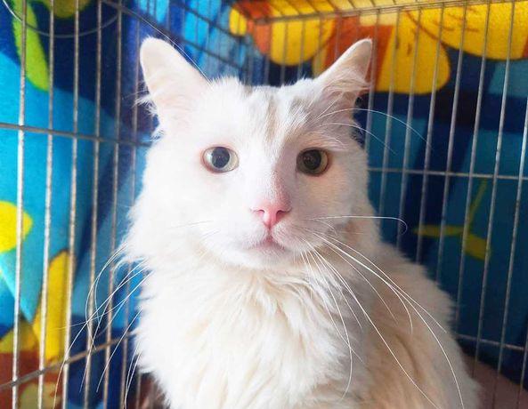 Котик Снежок (2 года, вакцинирован) кот, кошка, котенок, котики, котя