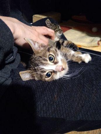 Bracia szukają domku, 3 miesięczne kochane kociaki