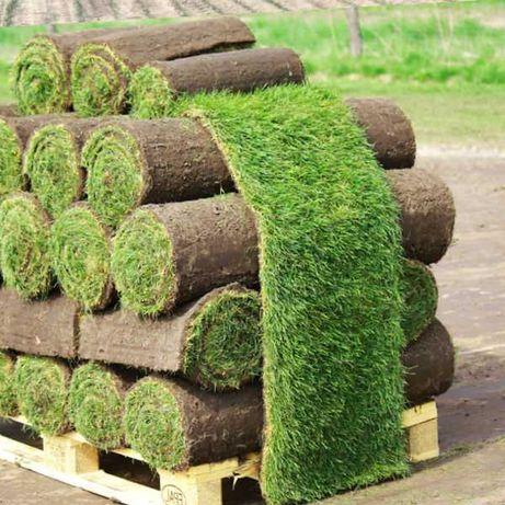 Рулонный газон Одесса, Киев - от производителя GM-garden