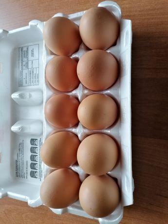 Sprzedam kurze jajka