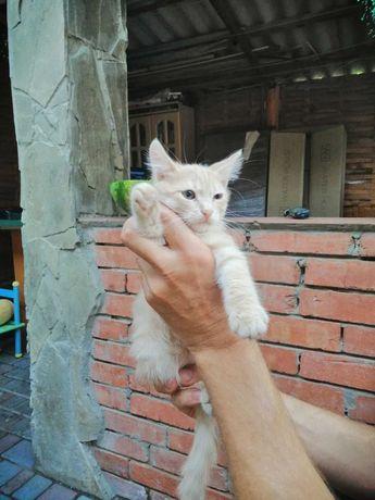 Котята 2 мес девочки полосатые в добрые руки.Кошка.Кот.кошеня