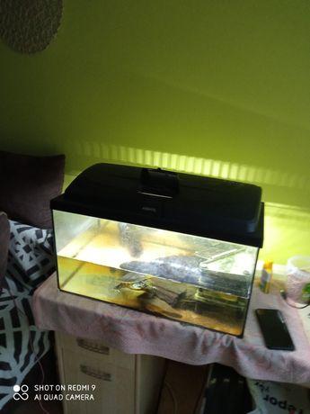 Sprzedam akwarium+ żółw wodnoladowy gratis