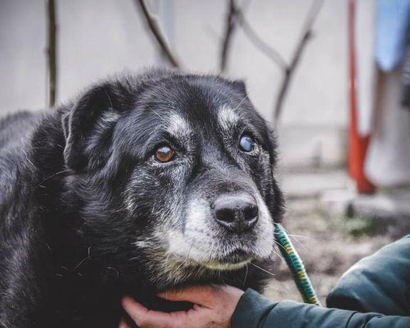 Niki- spokojny,potulny senior szuka kochającego domu!