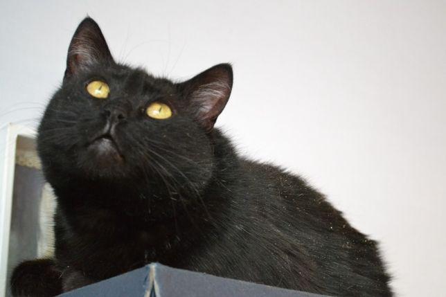 ніжна грайлива кішечка чорнушка 2р