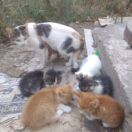 Котята в дар, 4 котика, 2 кошечки.
