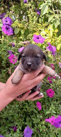 Щенята-малыши в добрые и заботливые руки :)