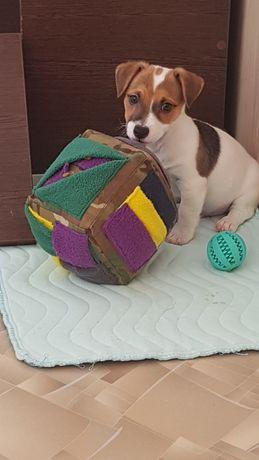 Поисковой нюхательный куб для воспитания щенка или молодой собаки