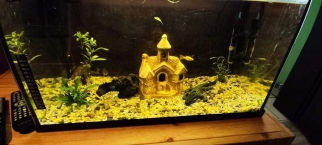 Akwarium 60L z rybkami