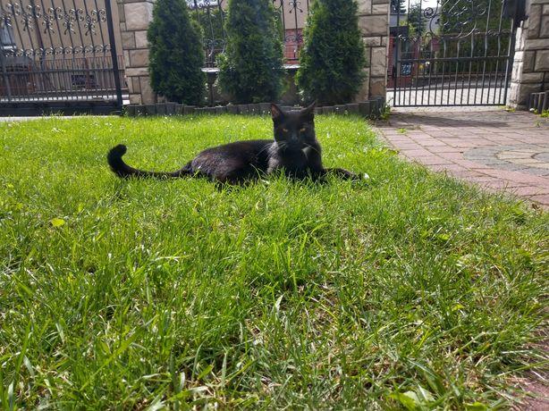 Zaginął kot na Józefce w Piekarach Śląskich