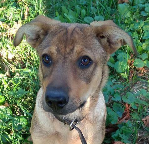 Цуценя щенок puppy