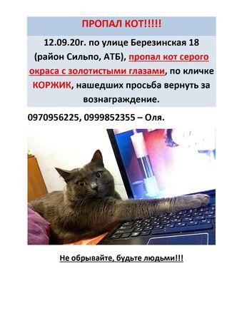 Пропал кот КОРЖИК. Нашедшему награда 1000 грн.
