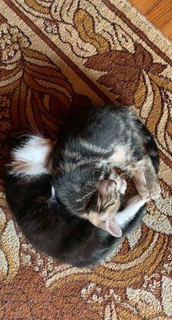 Oddam sliczne koty