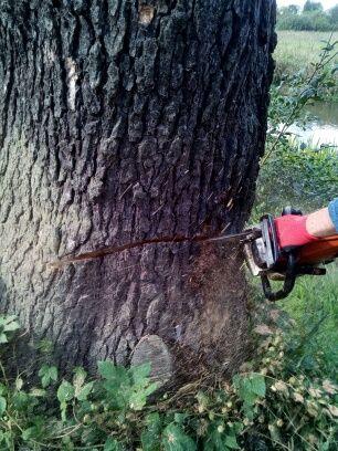 Wycinka drzew,frezowanie pni,usługi zwyżką,usługi rębakiem