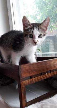 Кузя. Кот.