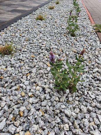 Kamień ozdobny grys GRANIT DALMATYNCZYK 16-22 transport