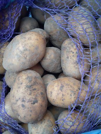 Картошка Бараболя